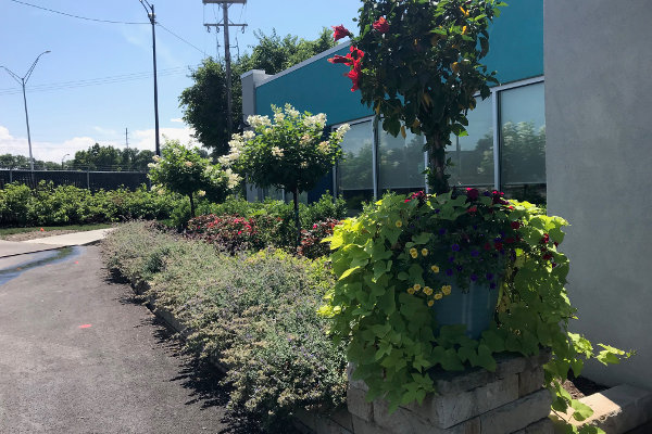 landscaping outside commercial building