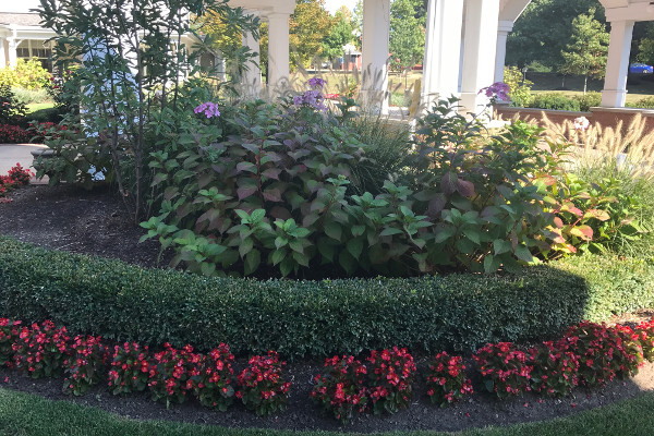 Plant landscaping ideas